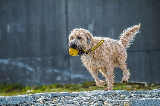 dog-ball-freelancer-dog-care-walking-business